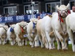 ROYAL HIGHLAND SHOW TOUR